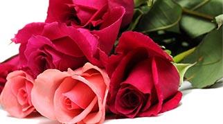 fresh-roses
