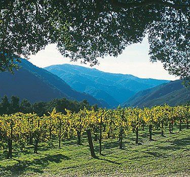carmel-valley-vineyard