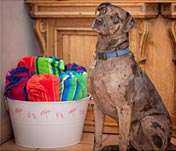 Pet Friendly Carmel Bed and Breakfast