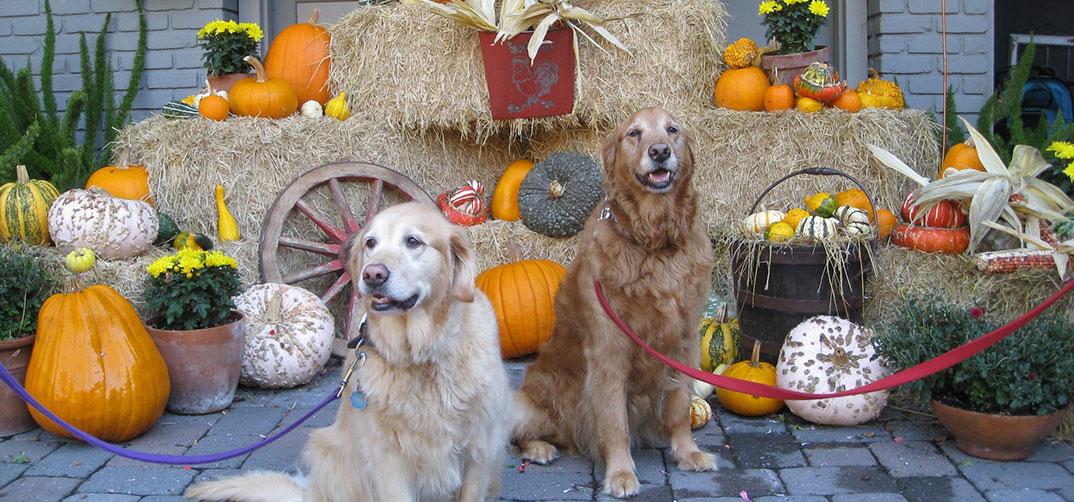 dogs-pumpkins