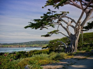 Bed and Breakfast in Carmel Beach