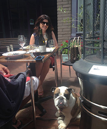 Bulldog on patio at lunch