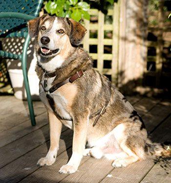 Dog Friendly Carmel