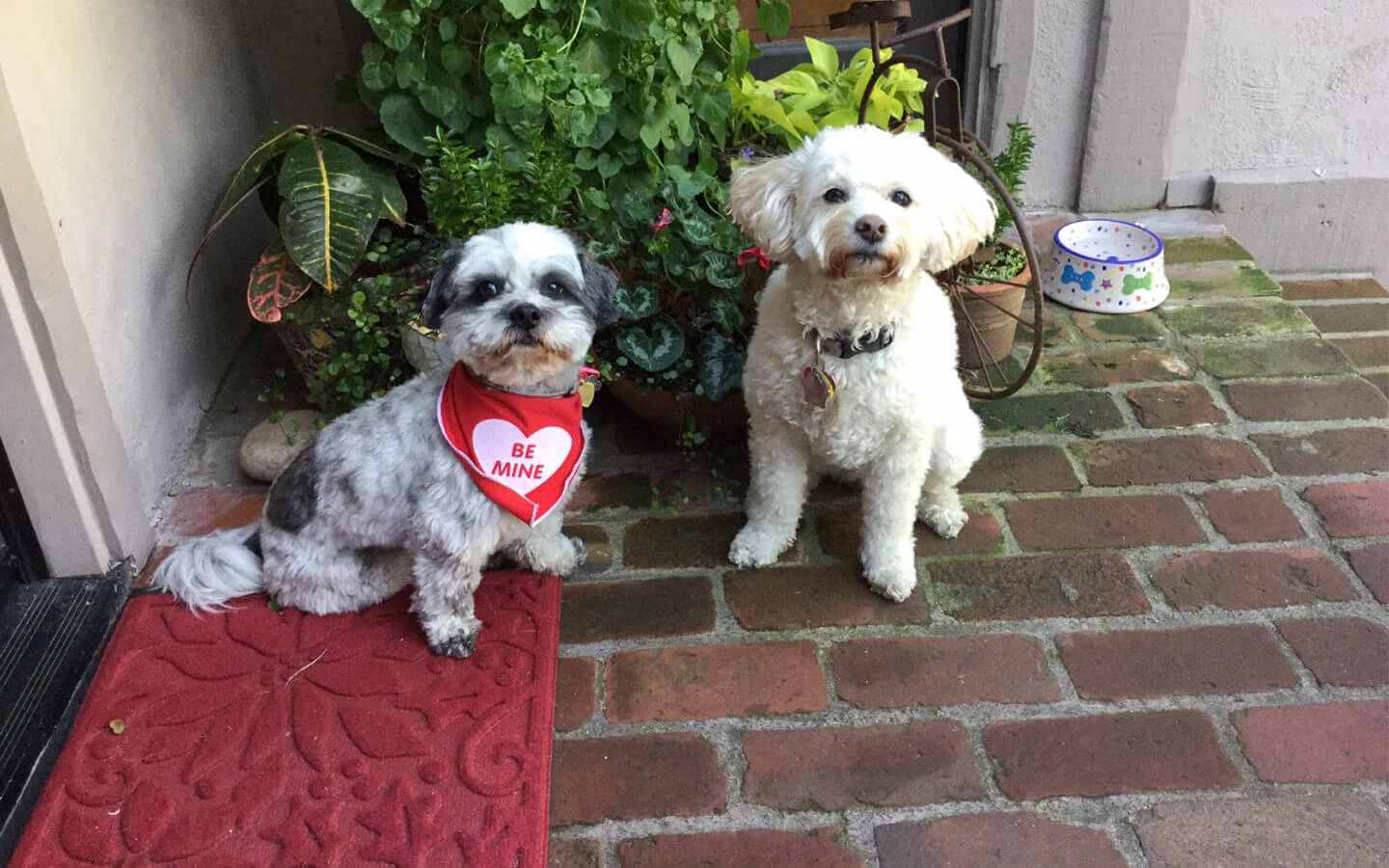 We Welcome Your Pets At Our Dog Friendly Hotel In Carmel