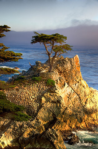 lone_cypress_pebble_beach_drive